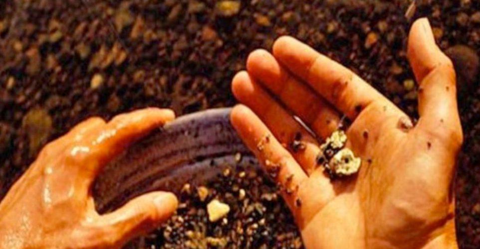Encuentran oro, de manera accidental, en la sierra de Montánchez